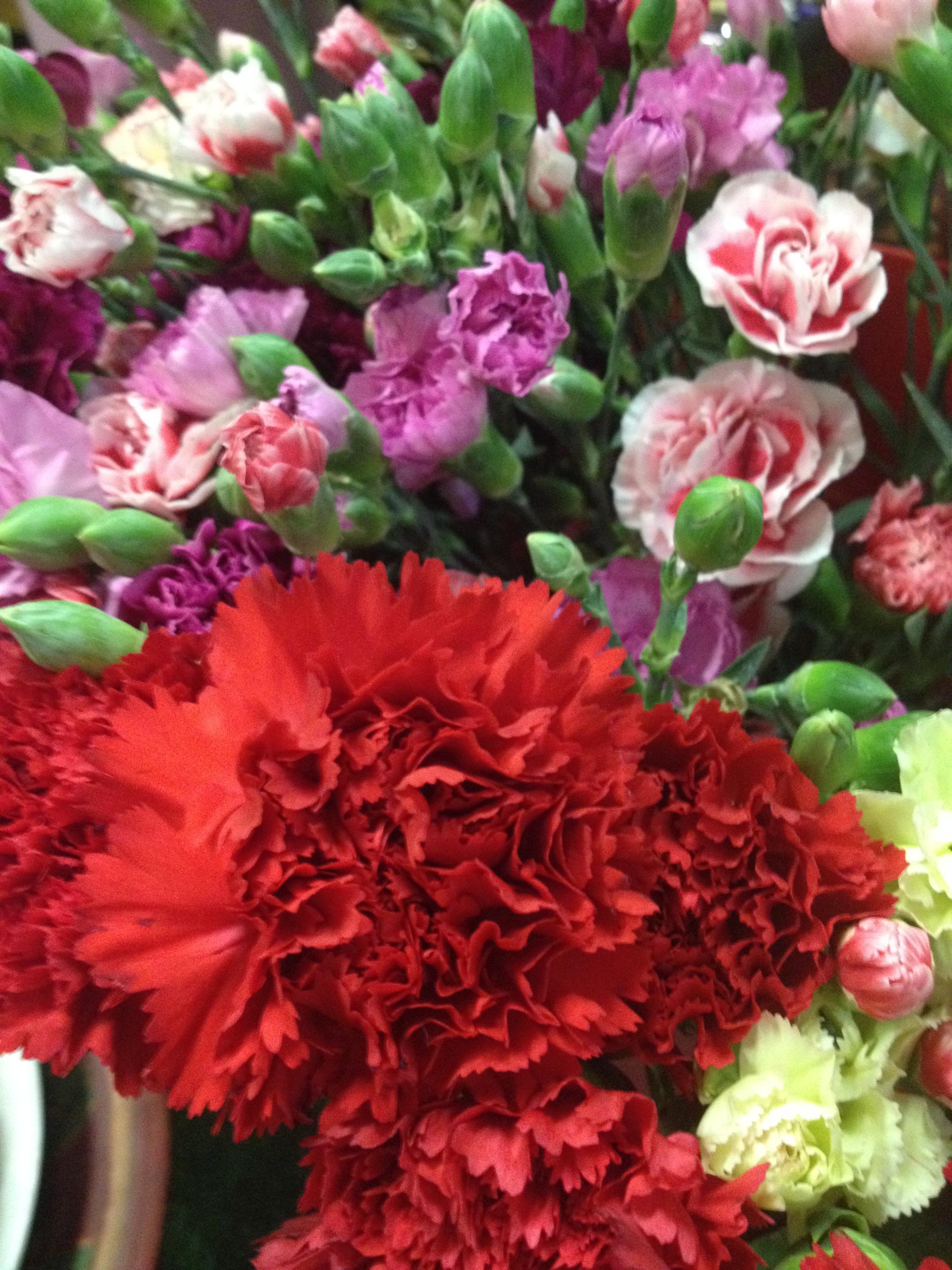 Coltivare Fiori Da Recidere il fiore del garofano ed una fioreria libreria - natura in